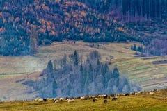 美丽的积雪覆盖的喀尔巴阡山脉在晚秋天 免版税库存图片