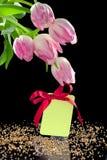 美丽的空白弓礼品标签郁金香 库存图片