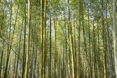 美丽的竹森林在台湾 免版税图库摄影