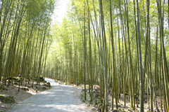 美丽的竹森林在台湾 库存照片