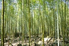 美丽的竹森林在台湾 库存图片
