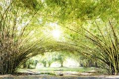 美丽的竹森林,与阳光的绿色自然背景 库存图片