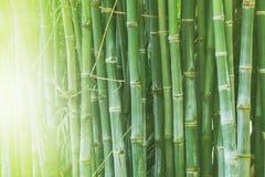 美丽的竹森林,绿色自然背景 免版税图库摄影