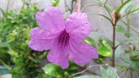 美丽的紫罗兰色颜色花 库存照片