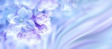 美丽的紫色丁香开花开花分支背景 问候礼品券模板 被定调子的图象 抽象本质 被定调子的软性 C 免版税库存照片