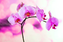 美丽的紫色兰花花 图库摄影
