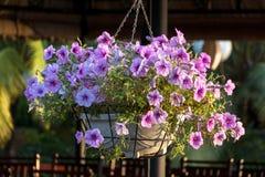 美丽的紫色喇叭花在五颜六色的被弄脏的背景中 免版税库存照片