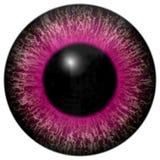 美丽的紫色红色3d万圣夜眼珠 库存例证