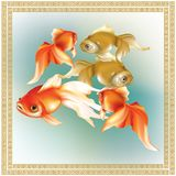 美丽的红色和金黄金鱼 免版税库存图片