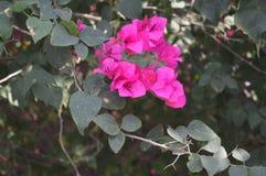 美丽的红色桃红色花 免版税库存图片