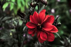 美丽的红色植物 库存图片
