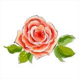 美丽的红色玫瑰。风格化水彩例证 免版税库存图片