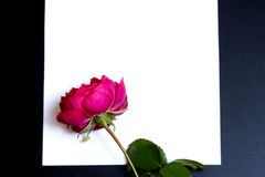 美丽的红色玫瑰和一张空白的白色纸片 图库摄影