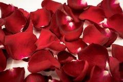 美丽的红色玫瑰花瓣背景  库存图片