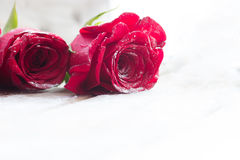 美丽的红色玫瑰 免版税图库摄影