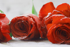 美丽的红色玫瑰 免版税库存照片