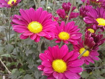 美丽的红色花公园 免版税库存图片