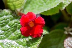 美丽的红色花 库存照片