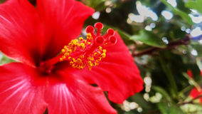 美丽的红色花 图库摄影