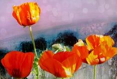 美丽的红色鸦片的特写镜头在呈杂色的五颜六色的背景的 库存图片