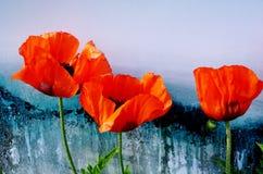 美丽的红色鸦片的特写镜头在呈杂色的五颜六色的背景的 免版税图库摄影