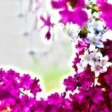 美丽的红色紫罗兰色和白花 库存图片