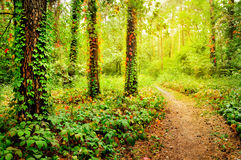 美丽的线索在森林里 免版税库存照片