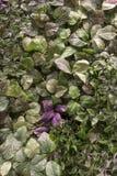 美丽的织地不很细小人为叶子 免版税库存图片