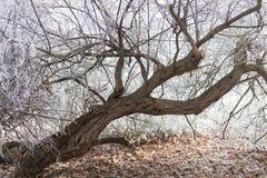 美丽的结冰的树在公园 库存照片