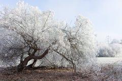 美丽的结冰的树在公园 免版税库存照片
