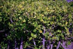 美丽的结构树 库存照片