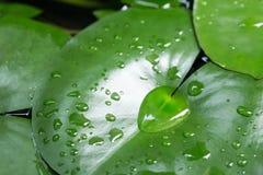 美丽的绿色叶子 免版税库存照片