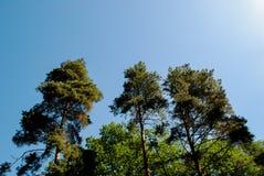 美丽的绿色树木园在公园Sofiyivka 库存照片