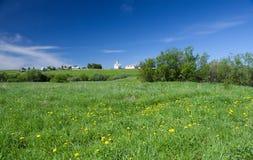 美丽的绿色草甸 图库摄影
