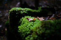 美丽的绿色青苔在与秋天叶子的阳光下 免版税库存照片