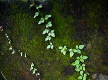 美丽的绿色青苔在森林里 库存图片