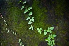 美丽的绿色青苔在森林里 免版税图库摄影