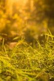 美丽的绿草抽象背景在橙色日落阳光下与bokeh特写镜头 免版税图库摄影