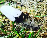 美丽的羽毛 库存图片