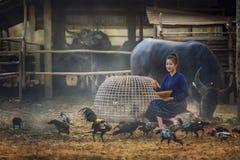 美丽的老挝妇女哺养的鸡在农厂背景的乡下 免版税库存图片