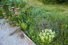 草本庭院 库存图片