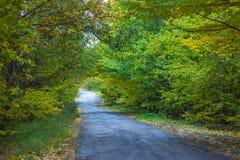 美丽的胡同在有五颜六色的树和阳光的一个公园 免版税库存图片