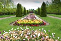 美丽的胡同在有异乎寻常的植物的公园 免版税库存照片