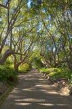 美丽的胡同在Kirstenbosch植物园里 库存图片