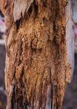 美丽的腐烂的树 免版税库存图片