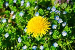 美丽的自然春天庭院 免版税库存图片