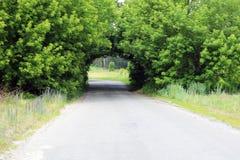 美丽的自然曲拱,相似与隧道,在农村路在夏天在旅途期间 图库摄影