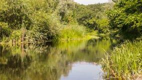 美丽的自然河 股票视频