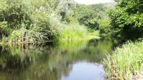 美丽的自然河 影视素材