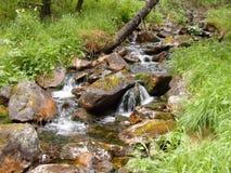 美丽的自然瀑布在森林里在夏天 免版税库存图片